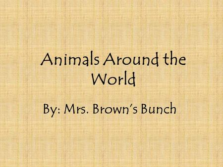 Animals Around the World By: Mrs. Brown's Bunch. Spider Monkey *Monkeys have a sense of fairness. *They are highly social animals.