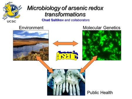 Chad Saltikov and collaborators Microbiology of arsenic redox transformations Molecular GeneticsEnvironment Public Health UCSC.