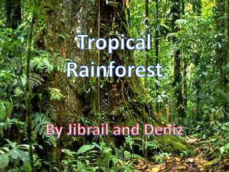 There are many rainforests in the world and the biggest one, the Amazon Rainforest, is located in South America. There are rainforests in Africa, Central.