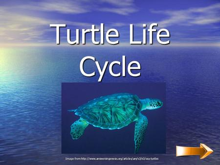 Turtle Life Cycle Image from