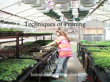 Techniques of Pruning Unit 33 Introduction Horticulture.