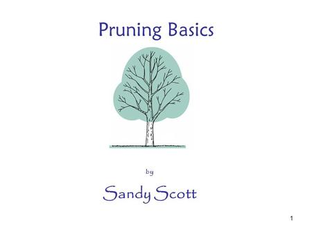 "1 Pruning Basics by Sandy Scott. 2 Pruning Equipment Gloves Hand pruners ½"" –By pass –Anvil –Ratchet –Strong metal –Safety lock –Spring –Sharp –Clean."