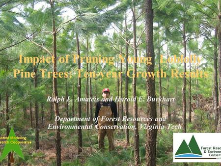 Impact of Pruning Young Loblolly Pine Trees: Ten-year Growth Results Ralph L. Amateis and Harold E. Burkhart Department of Forest Resources and Environmental.