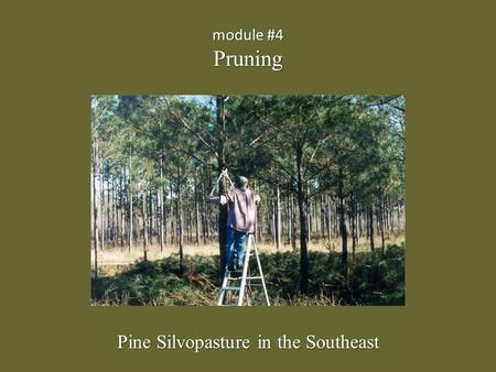 Module #4 Pruning Pine Silvopasture in the Southeast.