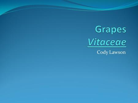 Cody Lawson. Vitaceae Genus: Vitis Vinifera Grows on vines Fruiting Berry.