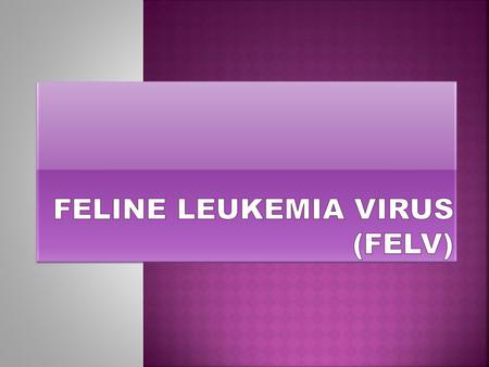 What is FeLV? Feline leukemia virus (FeLV), is a retrovirus that is associated with both neoplastic and nonneoplastic (immnosuppressive) diseases. The.