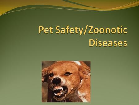 Definitions Zoonotic Diseases that can be transmitted from animals to humans Ex: Rabies Parasite Organisms that live on or in a host, which the parasite.