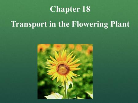 Transport in the Flowering Plant