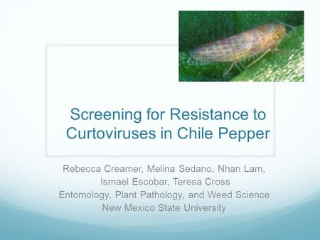 Screening for Resistance to Curtoviruses in Chile Pepper Rebecca Creamer, Melina Sedano, Nhan Lam, Ismael Escobar, Teresa Cross Entomology, Plant Pathology,