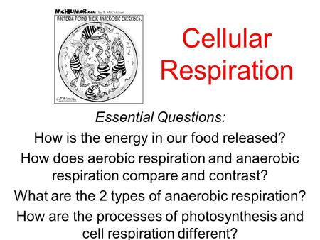 Cellular Respiration Essential Questions: