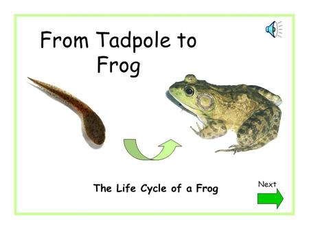 From Tadpole to Frog Next The Life Cycle of a Frog.
