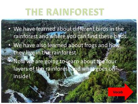 THE RAINFOREST We have learned about different birds in the rainforest and where you can find these birds. We have also learned about frogs and how they.