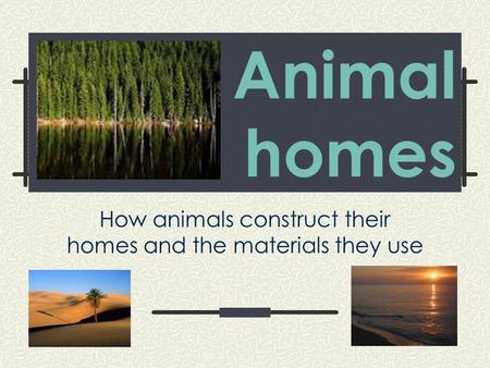 Animal homes How animals construct their homes and the materials they use.