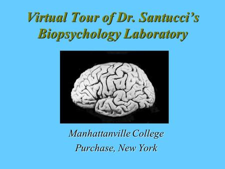 Virtual Tour of Dr. Santucci's Biopsychology Laboratory Manhattanville College Purchase, New York.