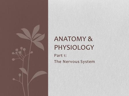 Part 1: The Nervous System ANATOMY & PHYSIOLOGY. Three Functions of the Nervous System: Sensory Input: Gathers stimuli (receives information) Integration: