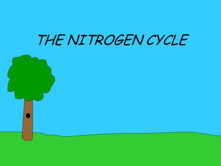 THE NITROGEN CYCLE NITROGEN NITROGEN QUICK FACTS We use nitrogen to build proteins We use it to build each piece of DNA 7 N 14.01 It's the #1 gas in.