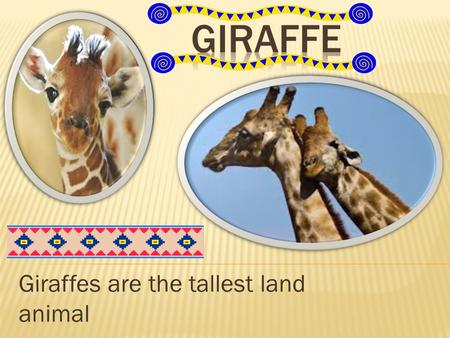 Giraffes are the tallest land animal.  Food  Were they live  Size  Interesting facts  Enemies  description.