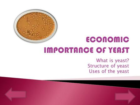 What is yeast? Structure of yeast Uses of the yeast.