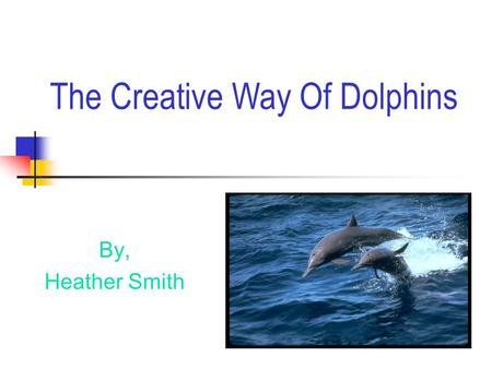 By, Heather Smith The Creative Way Of Dolphins Attraction or Distraction?  Attraction  Size,length & weight  Body parts.