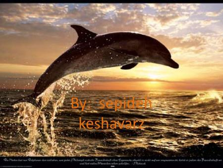 By: sepideh keshavarz. Pages Introduction1 What is dolphin?2 How fast do dolphin swim?3 What dolphin eat?4 How big the dolphin grow?5 Do dolphin have.