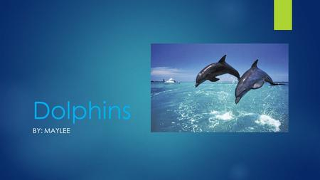 Dolphins BY: MAYLEE. HOW DO THEY LOOK?  Some dolphins are gray.  Some species look pink.  Some have black stripes, spots or black parts.  They have.