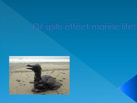 Direct way, through poison by ingestion, destruction of habitat and direct contact with the oil. Many kind of fish die from oil spill like whales and.