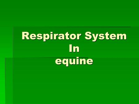 Respirator System In equine. A.1- Upper Airways  Nostril ( open from nasal cavity to the out side )  Nasal cavity.