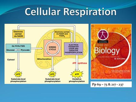 Cellular Respiration Pp 69 – 73 & 217 - 237.