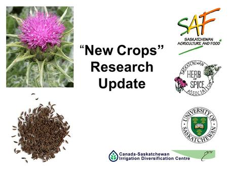 """New Crops"" Research Update. CDC ""New Crops"" Research Objective –Assist in the Identification and Adoption of ""New Crops"" suited to Saskatchewan –Suitable."