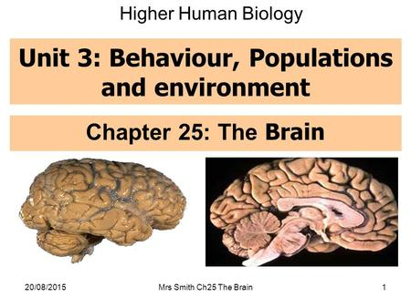 Unit 3: Behaviour, Populations and environment Chapter 25: The Brain 20/08/2015Mrs Smith Ch25 The Brain1 Higher Human Biology.