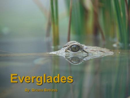 Everglades By: Briana Betress. Location Southern tip of Florida, from Lake Okeechobee southward to the Florida Bay Has an area of 34,000 –km 2 About half.