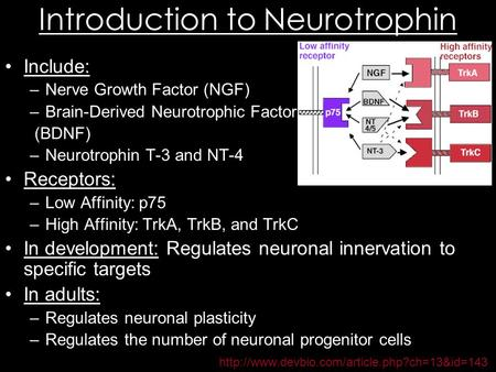 Introduction to Neurotrophin Include: –Nerve Growth Factor (NGF) –Brain-Derived Neurotrophic Factor (BDNF) –Neurotrophin T-3 and NT-4 Receptors: –Low Affinity: