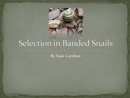 By Sam Careless. Banded snails display a variety of brilliant colours. In most cases the banded snail will have five brown or black bands running parallel.