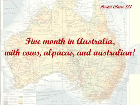Five month in Australia, with cows, alpacas, and australian! Bertin Claire 151.