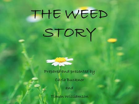 THE WEED STORY Prepared and presented by Carla Bucknor and Timon Williamson.