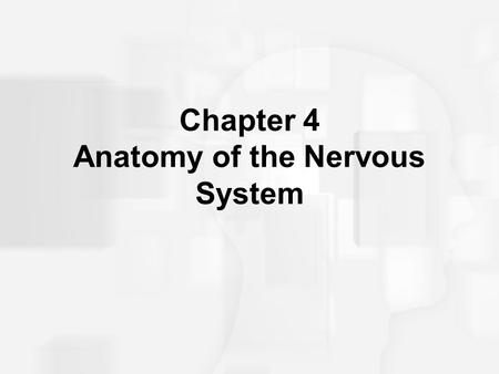 Chapter 4 Anatomy of the Nervous System. Structure of the Vertebrate Nervous System Neuroanatomy is the anatomy of the nervous system. Refers to the study.