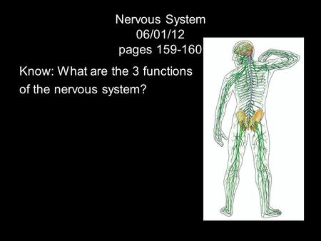 Nervous System 06/01/12 pages 159-160 Know: What are the 3 functions of the nervous system?