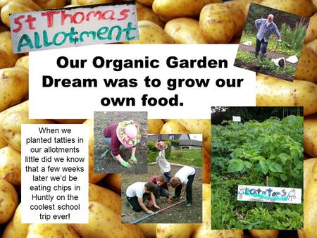 Our Organic Garden Dream was to grow our own food. When we planted tatties in our allotments little did we know that a few weeks later we'd be eating chips.