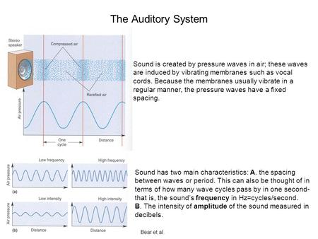 The Auditory System Sound is created by pressure waves in air; these waves are induced by vibrating membranes such as vocal cords. Because the membranes.