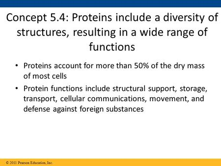Proteins account for more than 50% of the dry mass of most cells