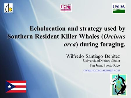Echolocation and strategy used by Southern Resident Killer Whales (Orcinus orca) during foraging. Wilfredo Santiago Benítez Universidad Metropolitana San.