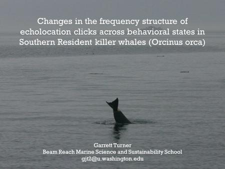 Changes in the frequency structure of echolocation clicks across behavioral states in Southern Resident killer whales (Orcinus orca) Garrett Turner Beam.