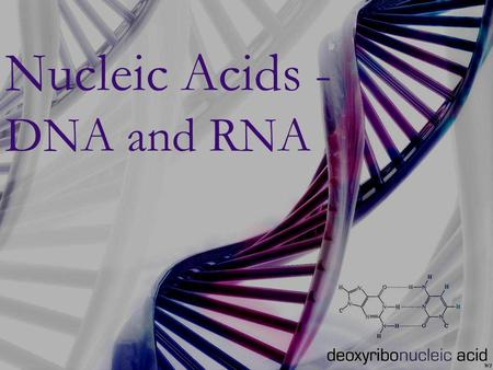 Nucleic Acids -DNA and RNA