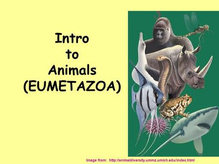 Intro to Animals (EUMETAZOA) Image from: