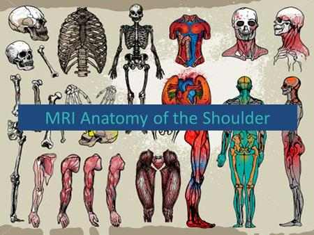 MRI Anatomy of the Shoulder. Functional Anatomy Glenohumeral joint is a ball and socket synovial. Glenoid cavity inherently unstable. Stability provided.