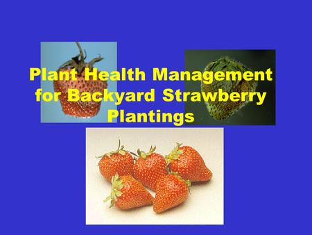 Plant Health Management for Backyard Strawberry Plantings
