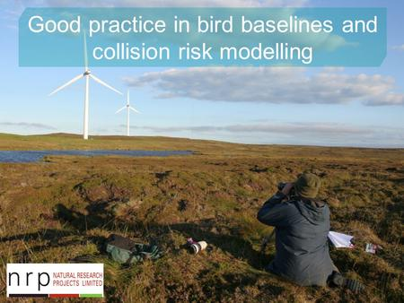 Good practice in bird baselines and collision risk modelling.