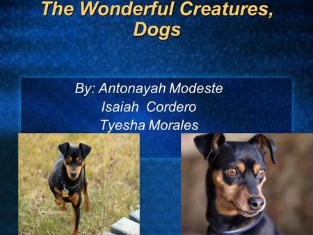 The Wonderful Creatures, Dogs By: Antonayah Modeste Isaiah Cordero Tyesha Morales.