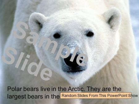 Polar bears live in the Arctic. They are the largest bears in the world. Sample Slide Random Slides From This PowerPoint Show.