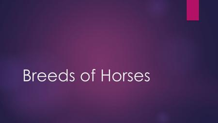 Breeds of Horses. Influences of Humans  Selective mating of large, heavy muscled horses to produce work animals  Development of refined, longer legged.